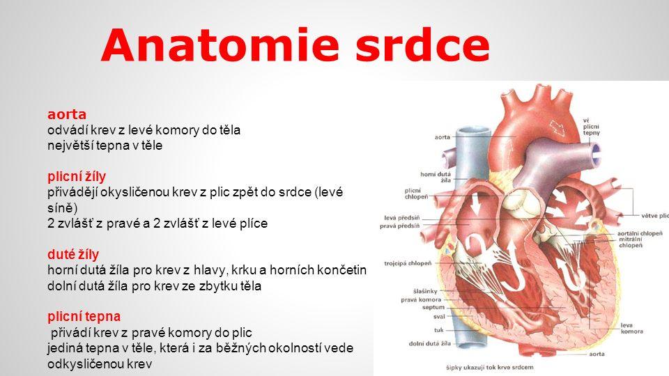Anatomie srdce aorta odvádí krev z levé komory do těla