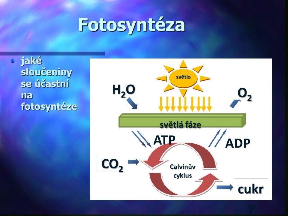 Fotosyntéza H2O O2 ATP ADP CO2 cukry