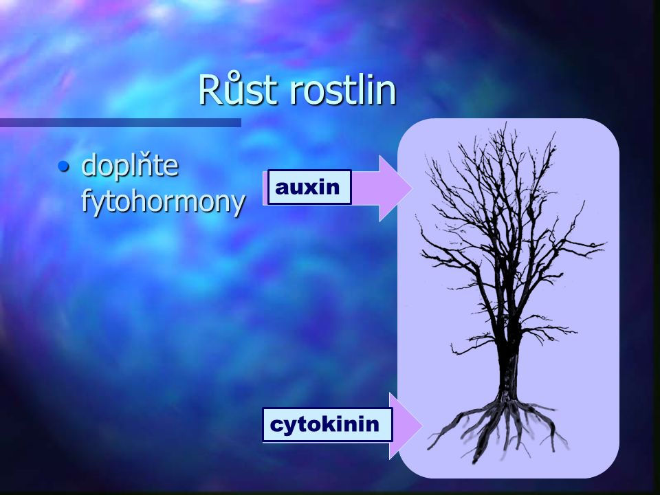 Růst rostlin doplňte fytohormony auxin cytokinin