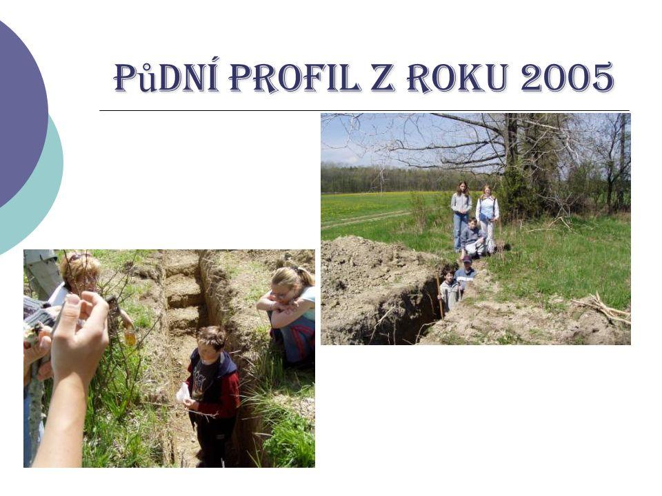 Půdní profil z roku 2005