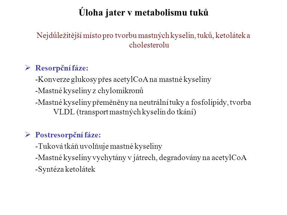 Úloha jater v metabolismu tuků