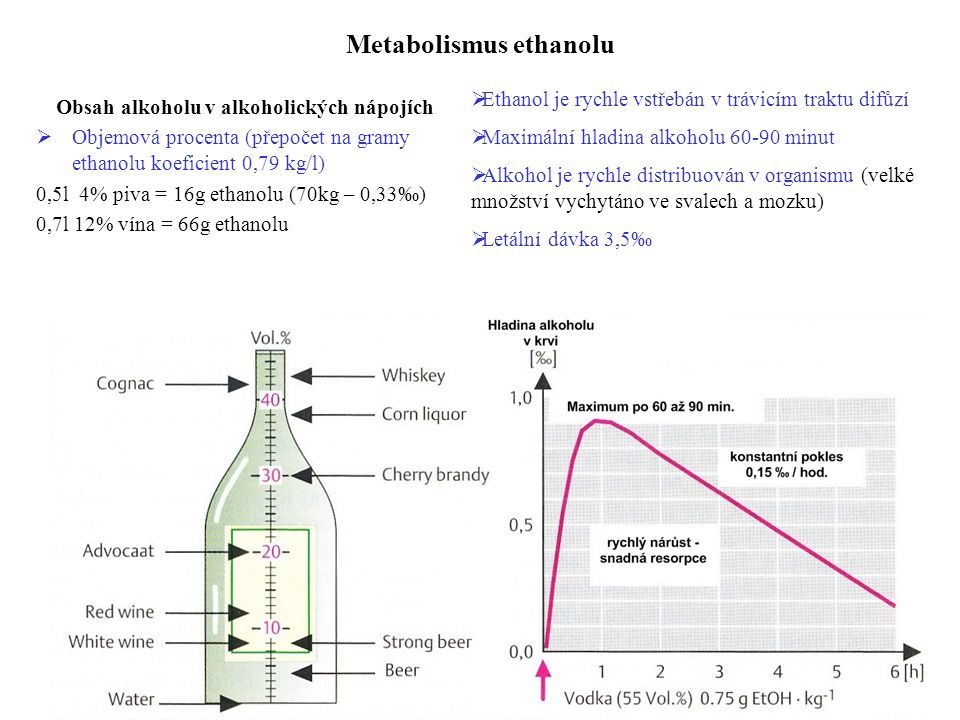 Metabolismus ethanolu