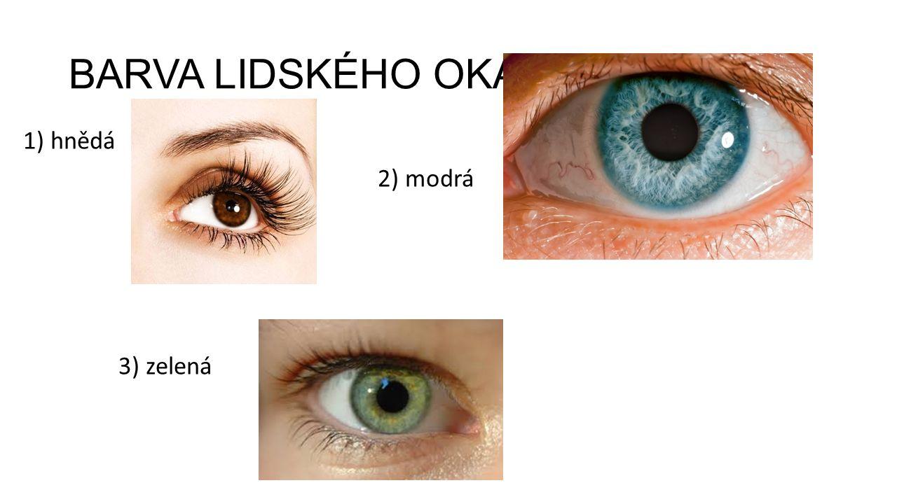 BARVA LIDSKÉHO OKA 1) hnědá 2) modrá 3) zelená