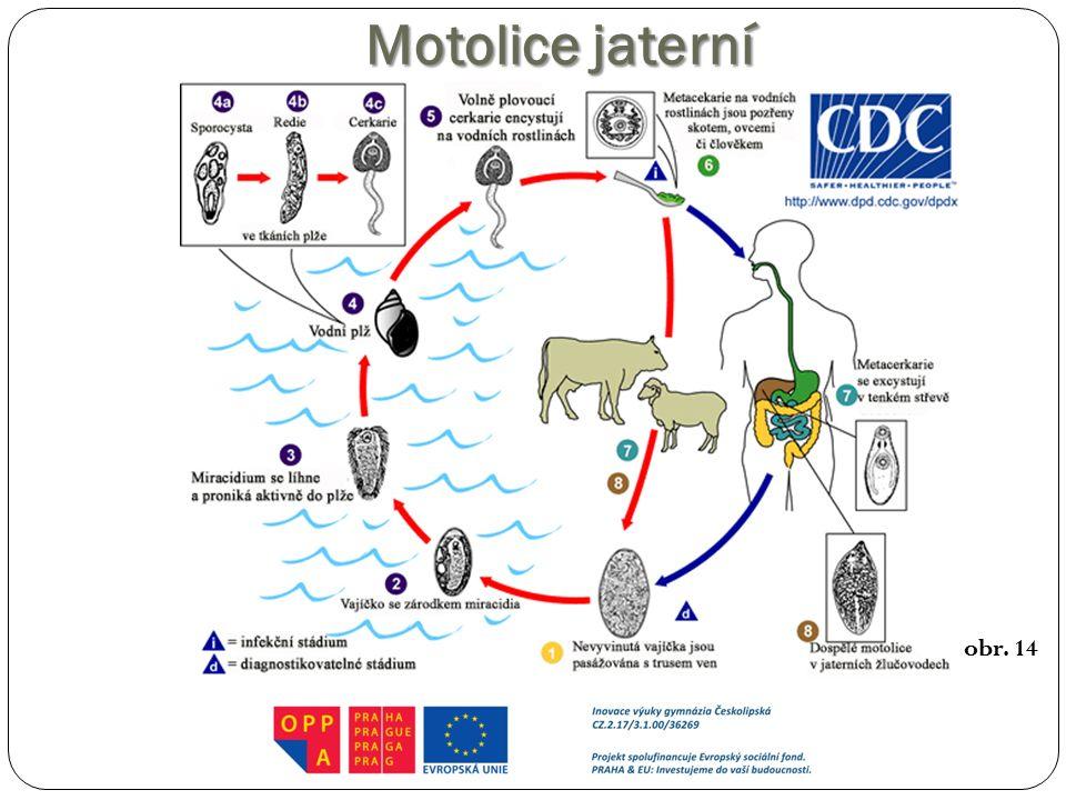 Motolice jaterní http://upload.wikimedia.org/wikipedia/commons/1/1a/Fasciola_hepatica_cycle_in_Czech.jpg.