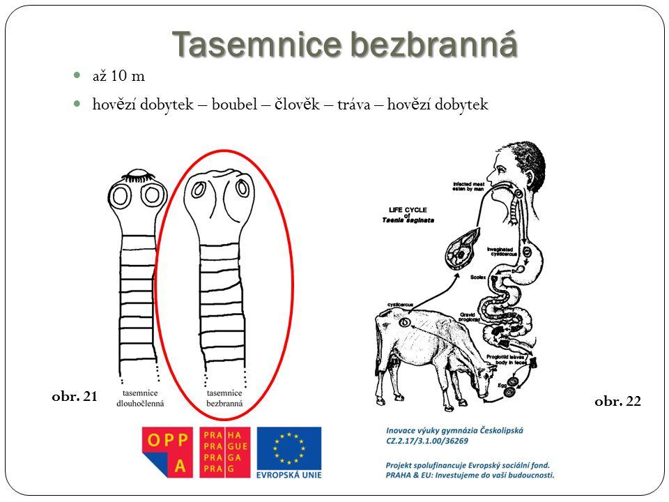 Tasemnice bezbranná až 10 m