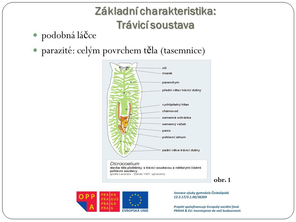 Základní charakteristika: Trávicí soustava