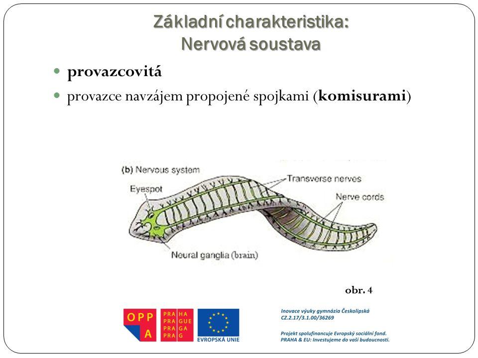 Základní charakteristika: Nervová soustava