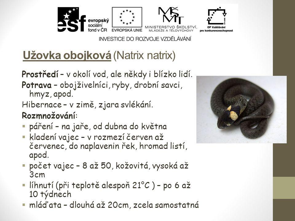 Užovka obojková (Natrix natrix)