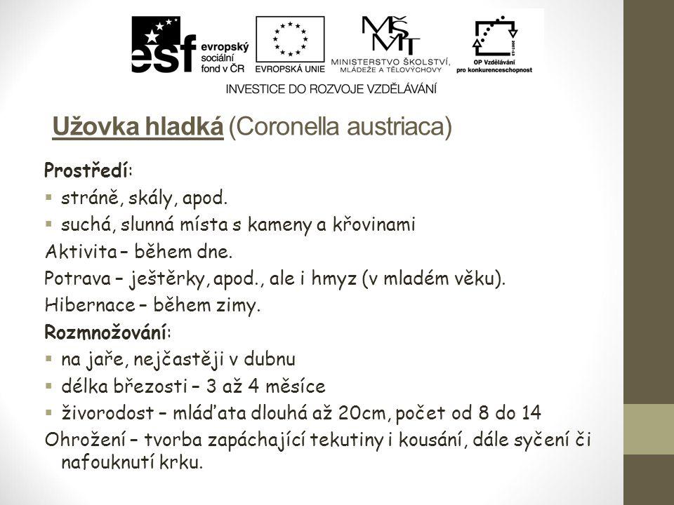 Užovka hladká (Coronella austriaca)