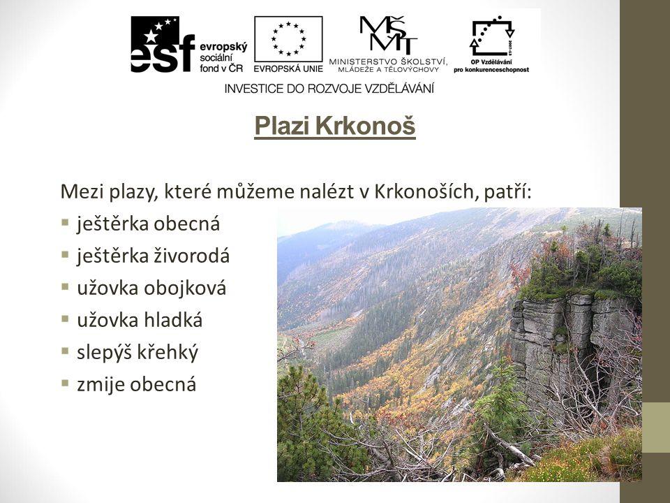 Plazi Krkonoš Mezi plazy, které můžeme nalézt v Krkonoších, patří: