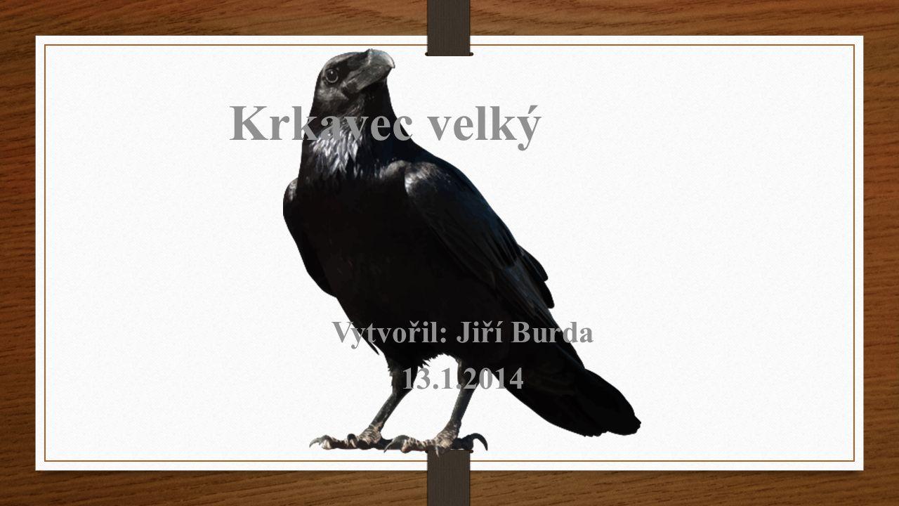 Krkavec velký Vytvořil: Jiří Burda 13.1.2014