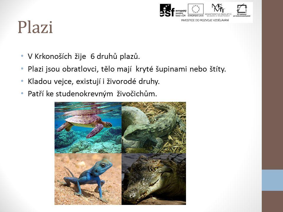 Plazi V Krkonoších žije 6 druhů plazů.