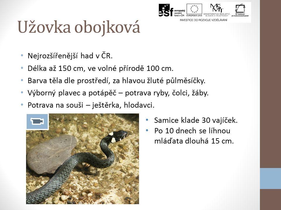 Užovka obojková Nejrozšířenější had v ČR.