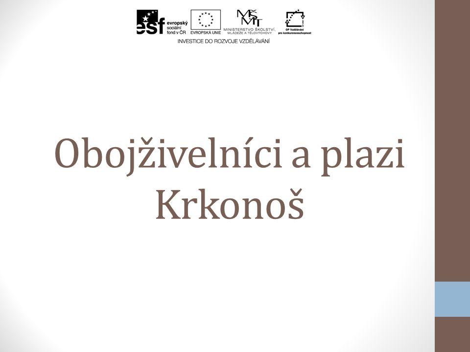 Obojživelníci a plazi Krkonoš