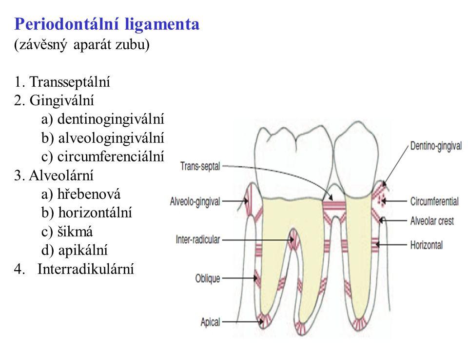Periodontální ligamenta