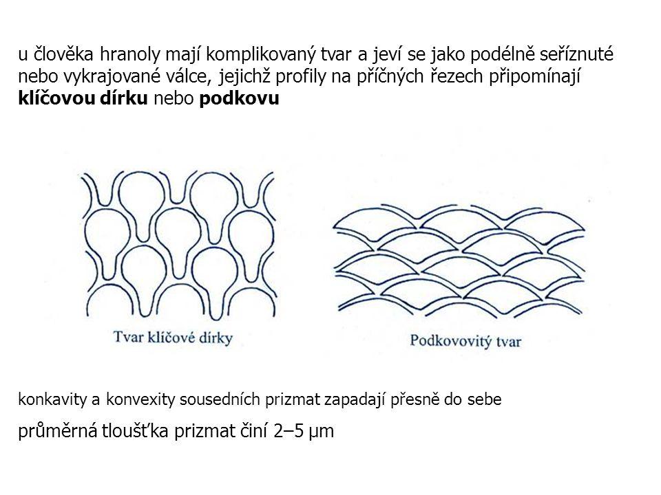 průměrná tloušťka prizmat činí 2–5 µm