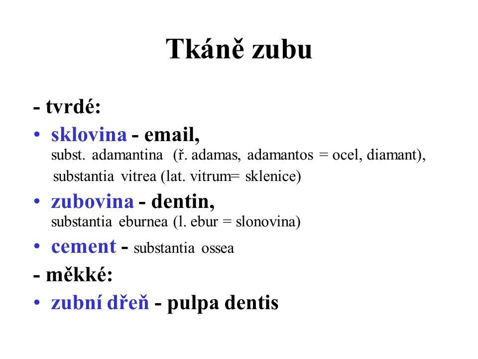 Tkáně zubu - tvrdé: