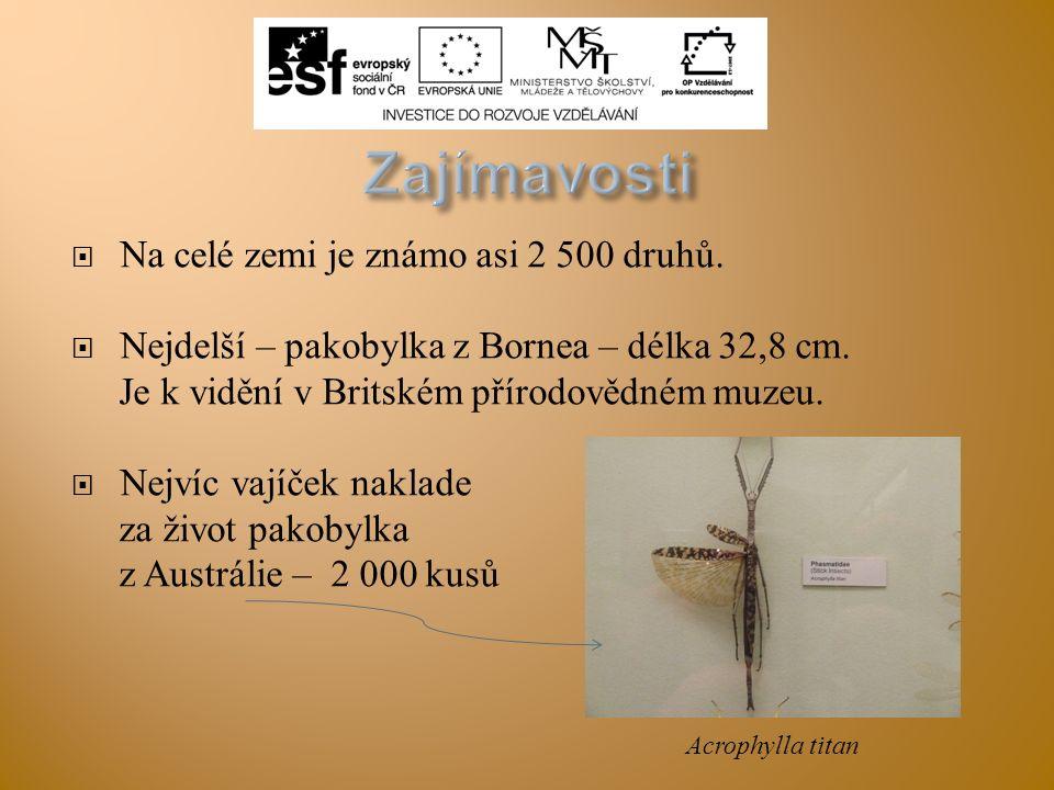Zajímavosti Na celé zemi je známo asi 2 500 druhů.
