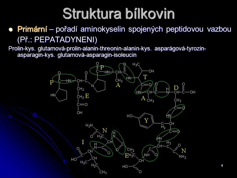 Struktura bílkovin Primární – pořadí aminokyselin spojených peptidovou vazbou. (Př.: PEPATADYNENI)