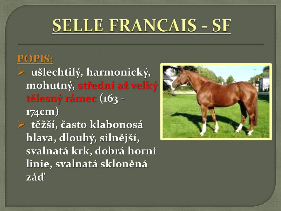 SELLE FRANCAIS - SF POPIS: