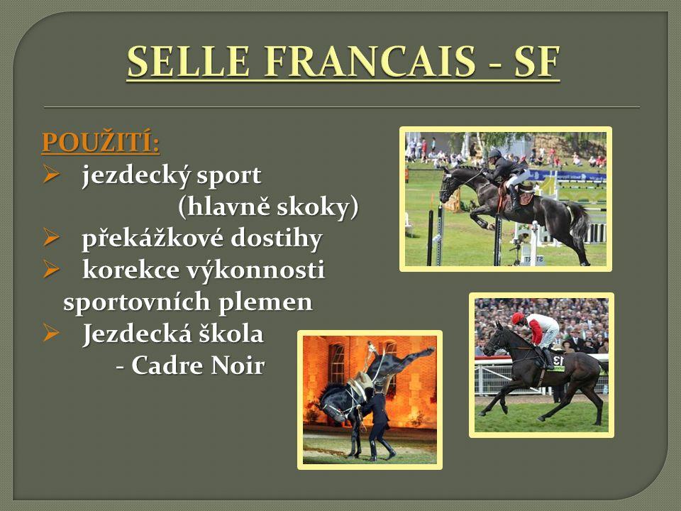 SELLE FRANCAIS - SF POUŽITÍ: jezdecký sport (hlavně skoky)