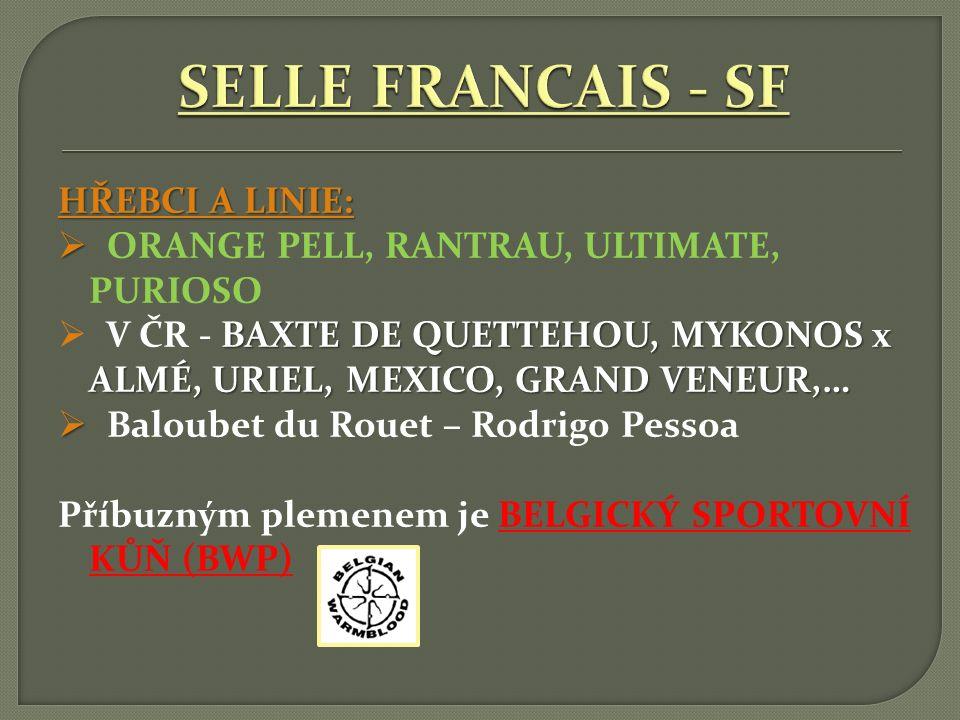 SELLE FRANCAIS - SF HŘEBCI A LINIE: