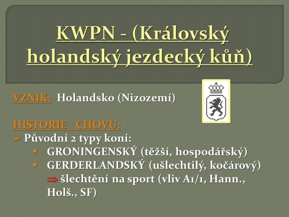 KWPN - (Královský holandský jezdecký kůň)