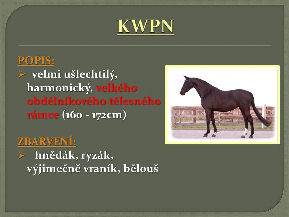 KWPN POPIS: velmi ušlechtilý, harmonický, velkého obdélníkového tělesného rámce (160 - 172cm) ZBARVENÍ: