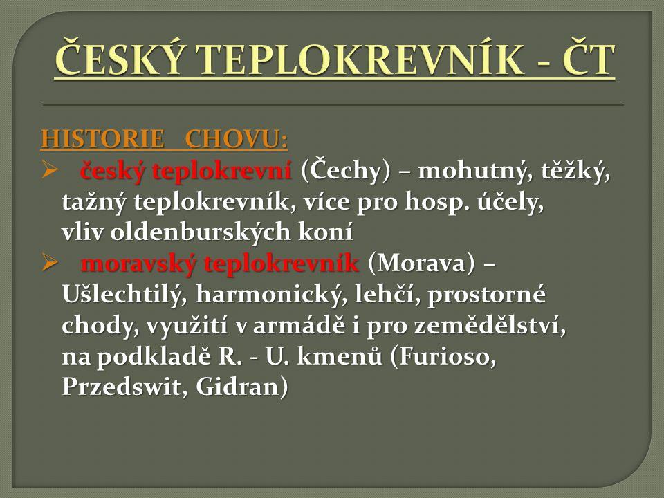 ČESKÝ TEPLOKREVNÍK - ČT
