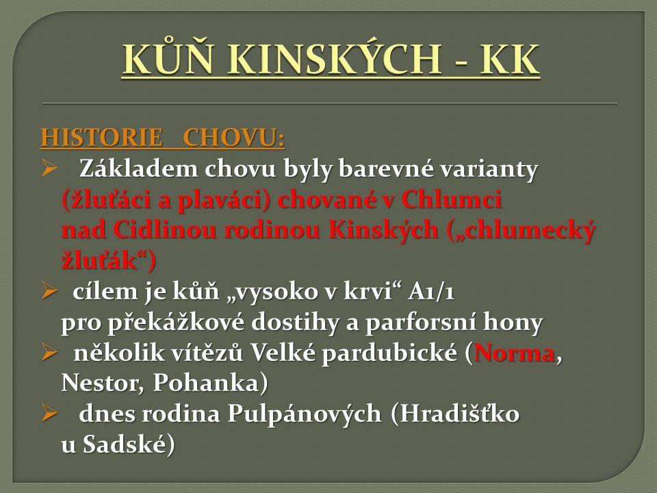 KŮŇ KINSKÝCH - KK HISTORIE CHOVU: