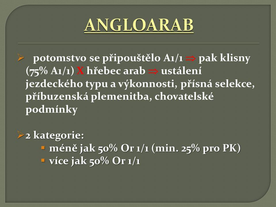 ANGLOARAB
