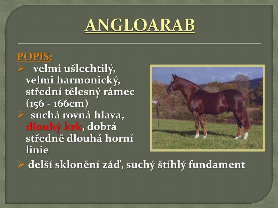 ANGLOARAB POPIS: velmi ušlechtilý, velmi harmonický, střední tělesný rámec (156 - 166cm)