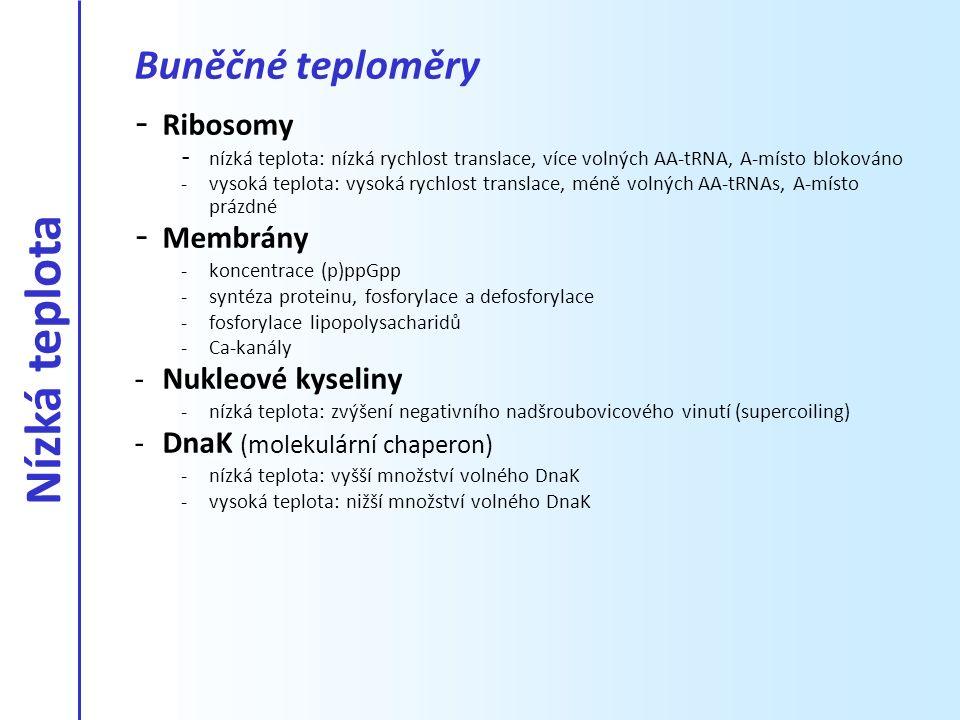 Nízká teplota Buněčné teploměry Ribosomy Membrány Nukleové kyseliny