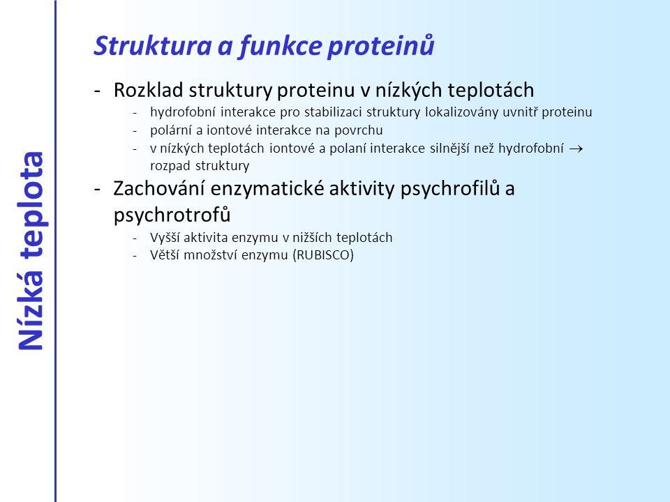 Nízká teplota Struktura a funkce proteinů