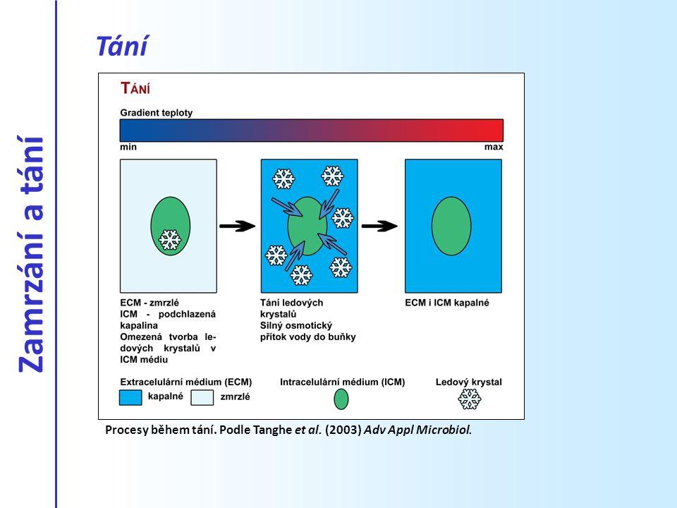 Tání Zamrzání a tání Procesy během tání. Podle Tanghe et al. (2003) Adv Appl Microbiol.