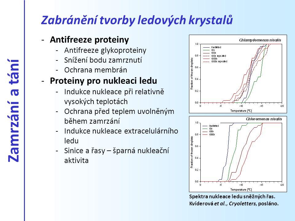 Zamrzání a tání Zabránění tvorby ledových krystalů Antifreeze proteiny