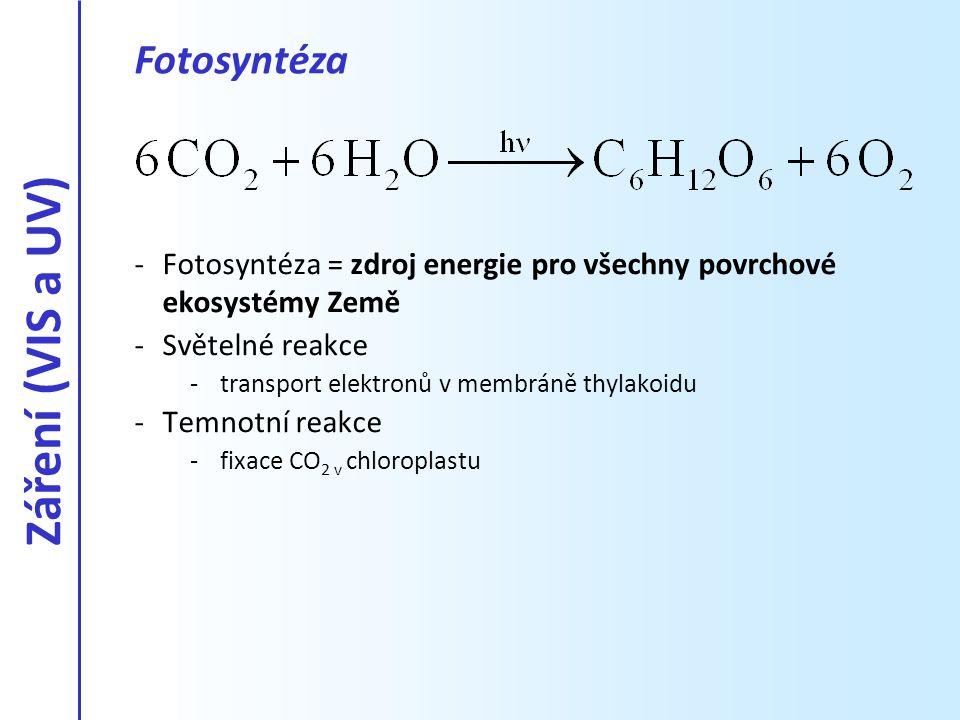 Záření (VIS a UV) Fotosyntéza