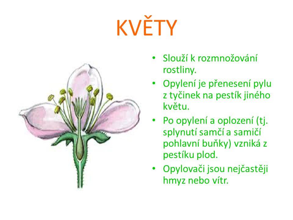 KVĚTY Slouží k rozmnožování rostliny.