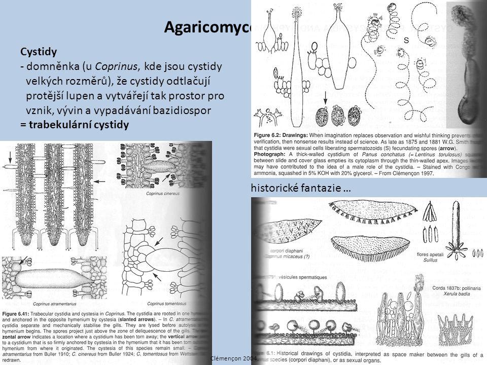 Agaricomycotina Cystidy