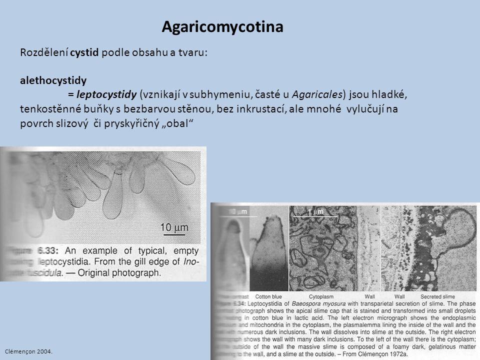 Agaricomycotina Rozdělení cystid podle obsahu a tvaru: alethocystidy