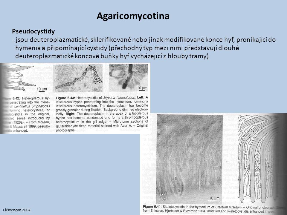 Agaricomycotina Pseudocystidy