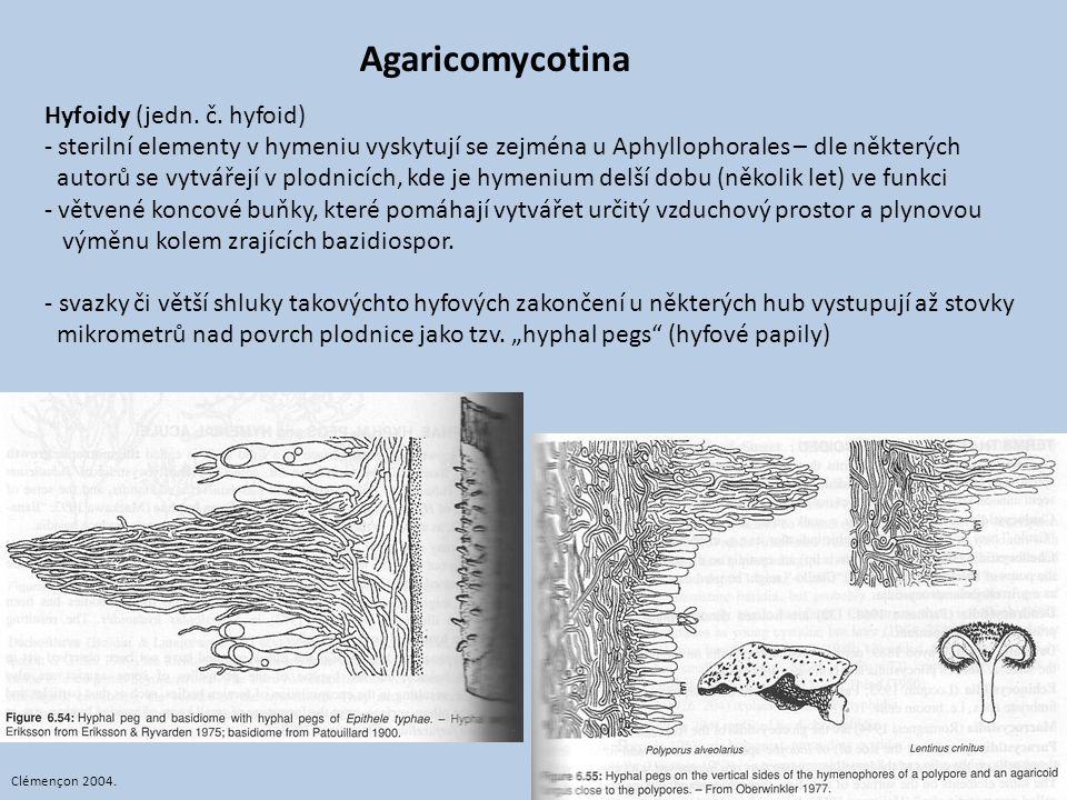 Agaricomycotina Hyfoidy (jedn. č. hyfoid)