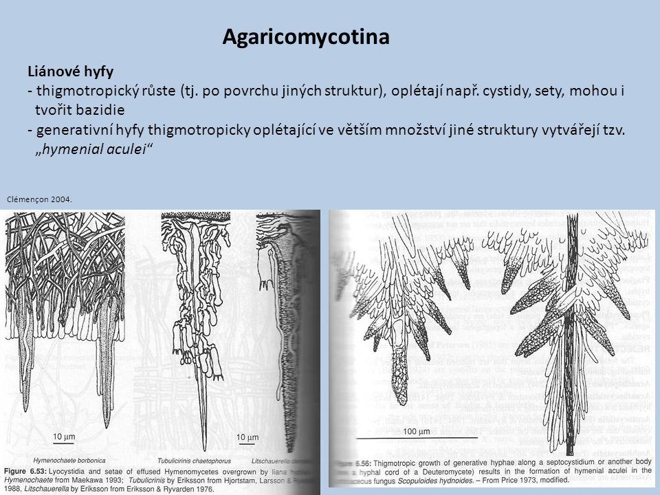 Agaricomycotina Liánové hyfy