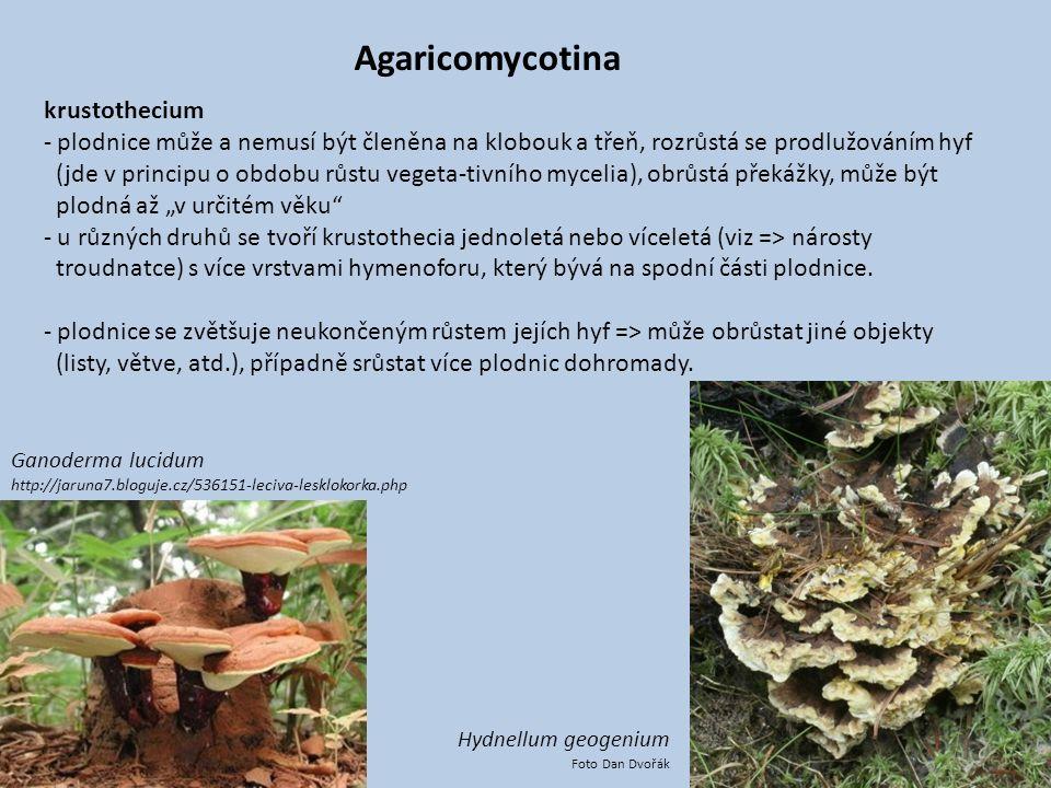 Agaricomycotina krustothecium