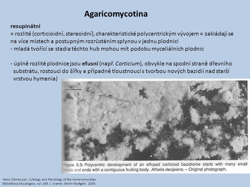 Agaricomycotina resupinátní