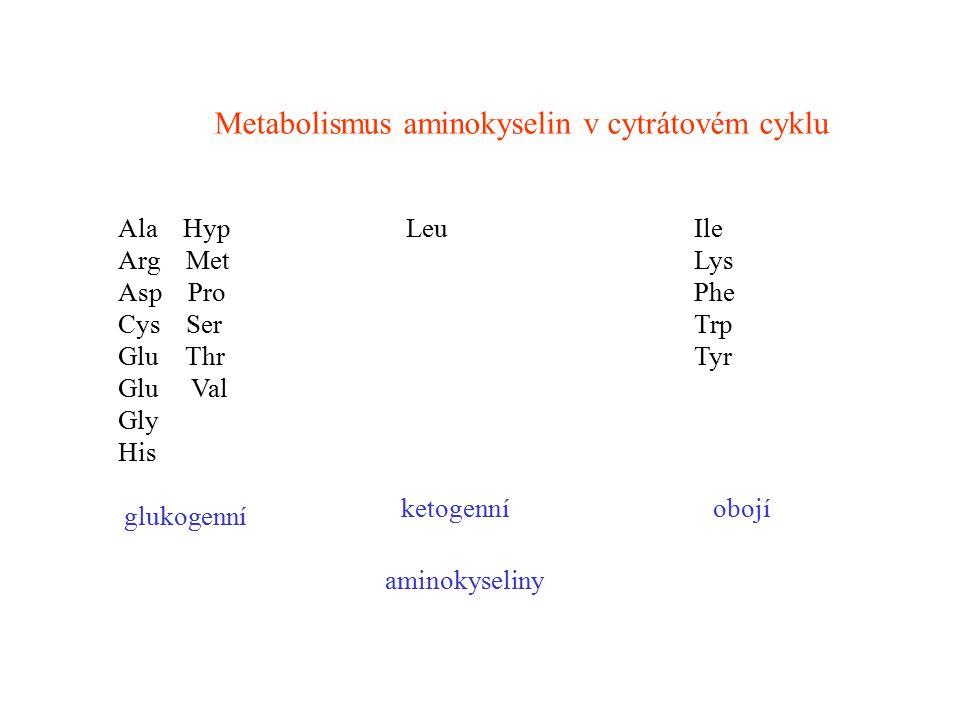 Metabolismus aminokyselin v cytrátovém cyklu