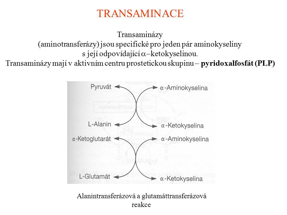 TRANSAMINACE Transaminázy