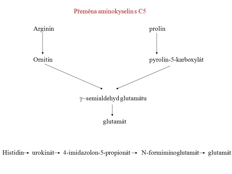 Přeměna aminokyselin s C5
