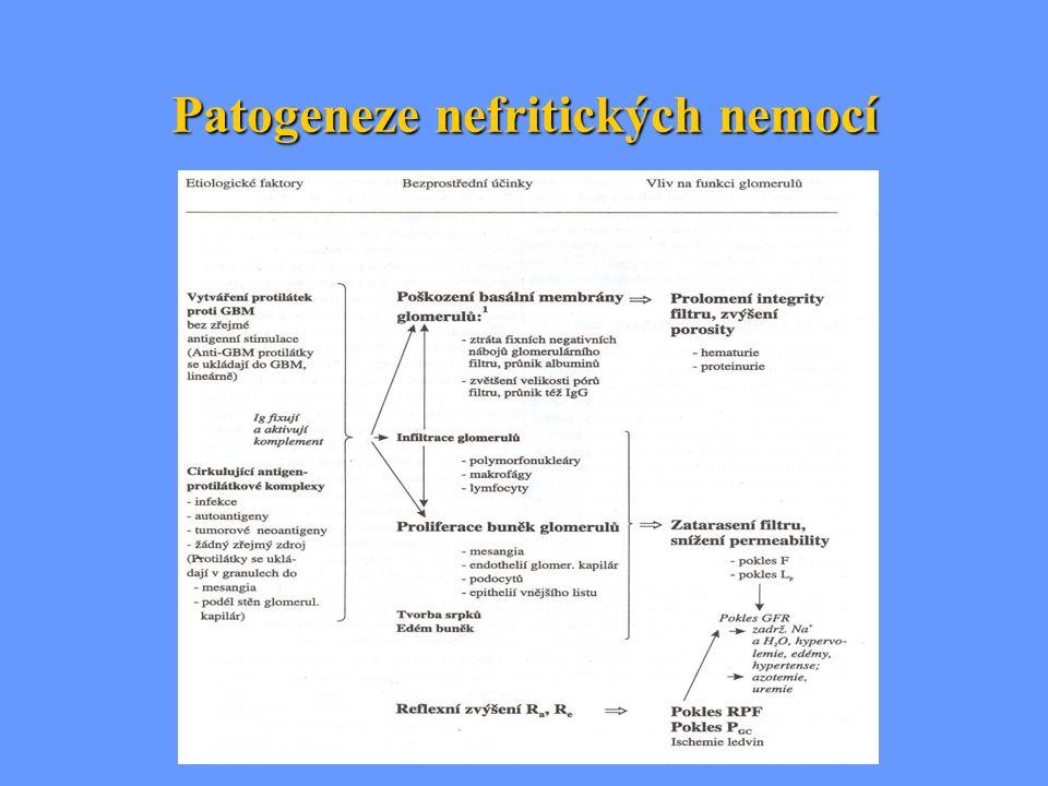 Patogeneze nefritických nemocí