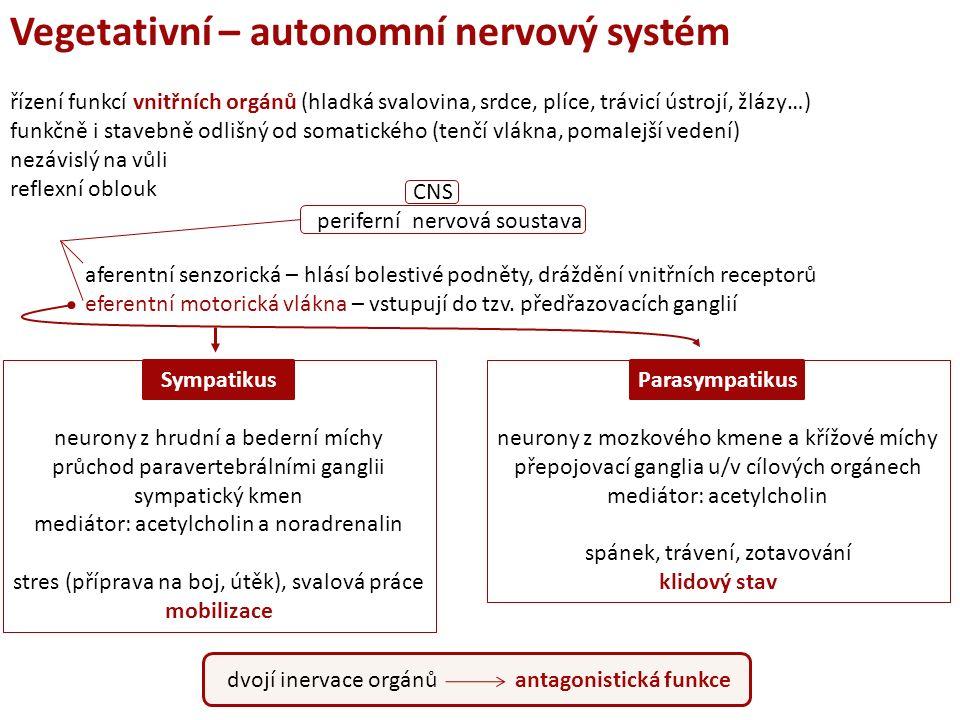 Vegetativní – autonomní nervový systém